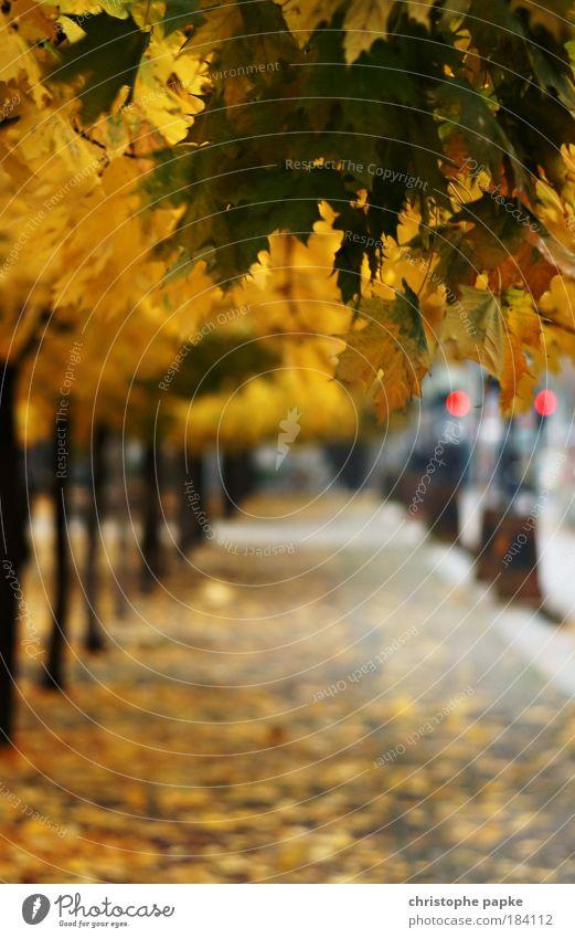 Berliner Spätherbst (2009) alt Baum Blatt gelb Herbst Wege & Pfade nass Hauptstadt schlechtes Wetter dehydrieren Gendarmenmarkt