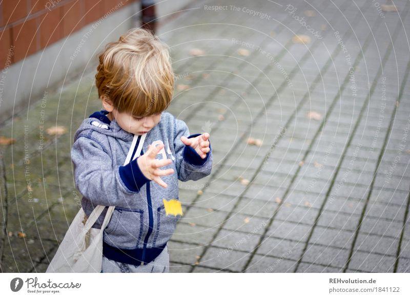 ups Mensch Kind Blatt Freude Herbst natürlich Bewegung Junge Spielen klein Glück maskulin Kindheit authentisch beobachten Neugier