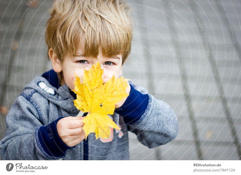 Herbstportrait Mensch maskulin Kind Kleinkind Junge Kindheit Gesicht 1 1-3 Jahre Blatt Pullover beobachten entdecken festhalten Spielen authentisch