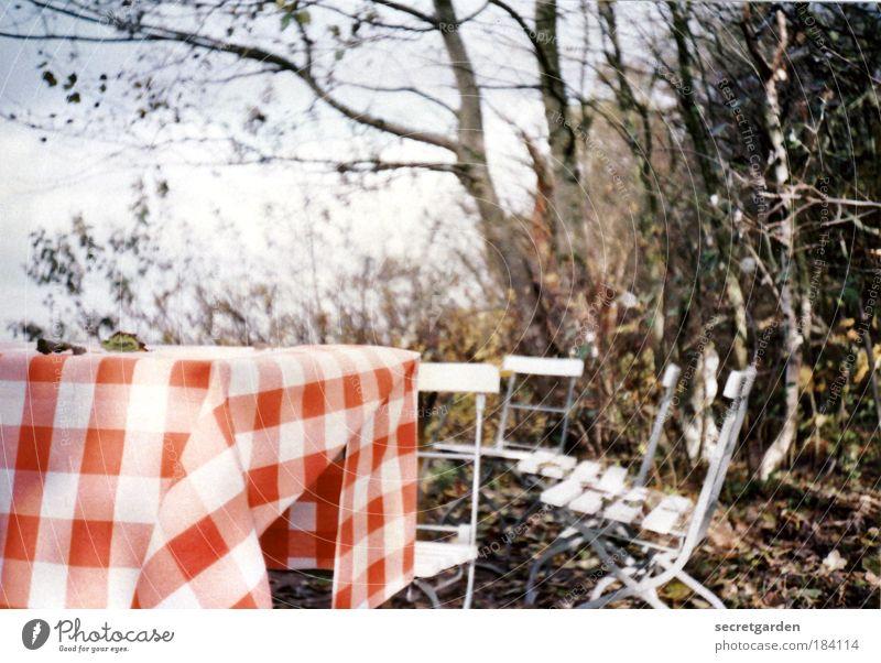 die leichtigkeit des seins. Natur Ferien & Urlaub & Reisen schön weiß Erholung rot Herbst Stil Garten Zufriedenheit Häusliches Leben Dekoration & Verzierung Wind Sträucher Ernährung Tisch