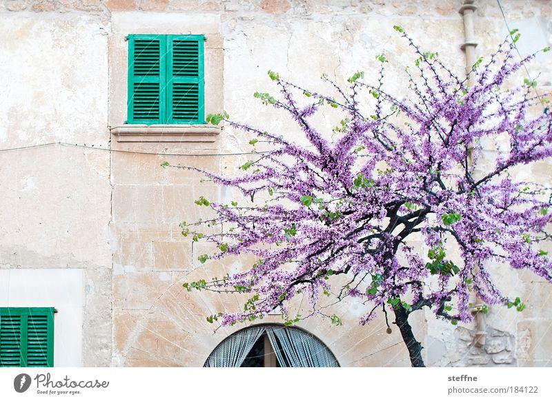 Herbst schön Baum Fenster Wand Mauer Frühling Pflanze ästhetisch Idylle Italien Dorf Blühend Schönes Wetter Lebensfreude Spanien Frankreich