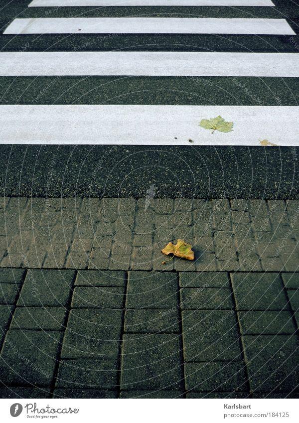straßen. herbst. Natur Stadt Blatt Straße Herbst Bewegung Wege & Pfade Stein Linie Design Ordnung Verkehr Lifestyle Boden Asphalt Zeichen