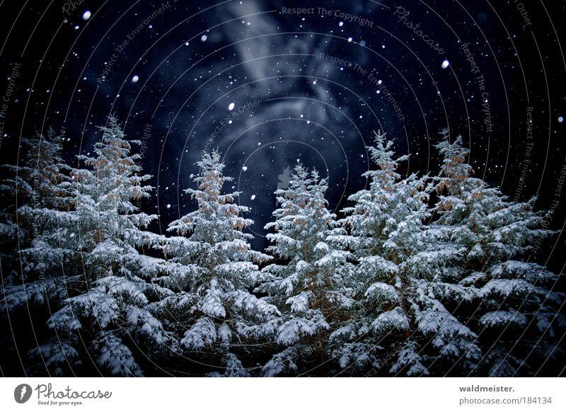 Geist der diesjährigen Weihnachtsnacht Baum Wald gruselig Schneefall Menschenleer Nachtaufnahme Winterwald Märchenwald dunkel Winterstimmung Farbfoto