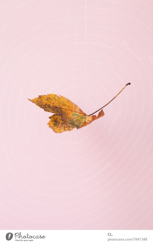 blatt, hängend Freizeit & Hobby Basteln Umwelt Natur Herbst Klima Klimawandel Wetter Blatt Schnur Nähgarn ästhetisch außergewöhnlich rosa Idee Inspiration