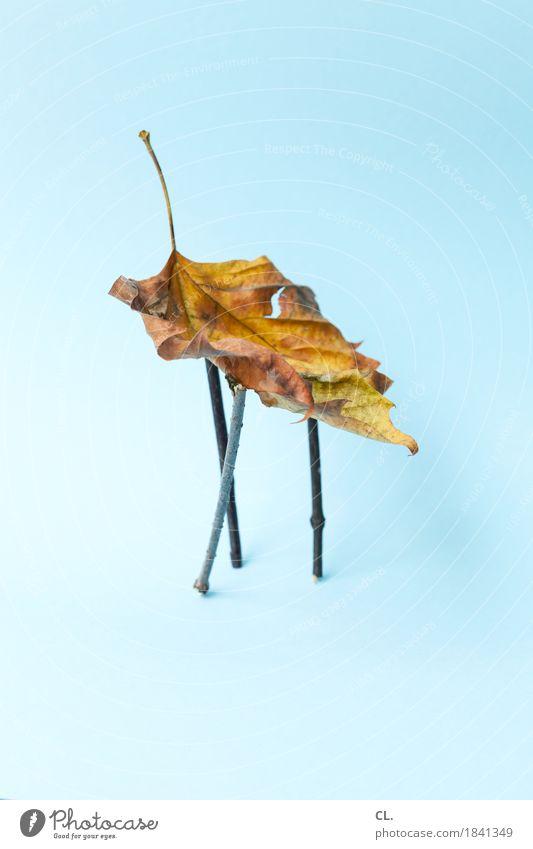 herbstverlängernde maßnahmen Freizeit & Hobby Basteln Umwelt Natur Herbst Klima Wetter Blatt Ast stehen ästhetisch außergewöhnlich blau Idee Inspiration