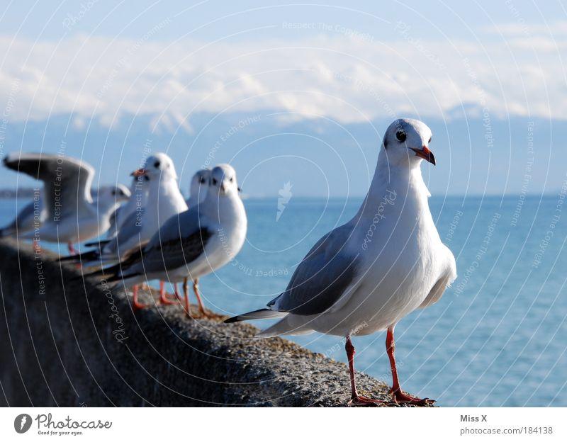 Bodensee Natur Himmel Ferien & Urlaub & Reisen ruhig Tier Erholung Berge u. Gebirge Freiheit See Landschaft Vogel Küste Wetter fliegen frei Ausflug