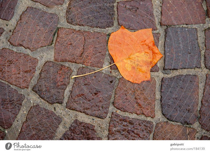 Ende eines Kurzstreckenfluges Natur Wasser Baum Pflanze Blatt Einsamkeit Straße Herbst Traurigkeit Regen braun Umwelt nass liegen Vergänglichkeit Sturm