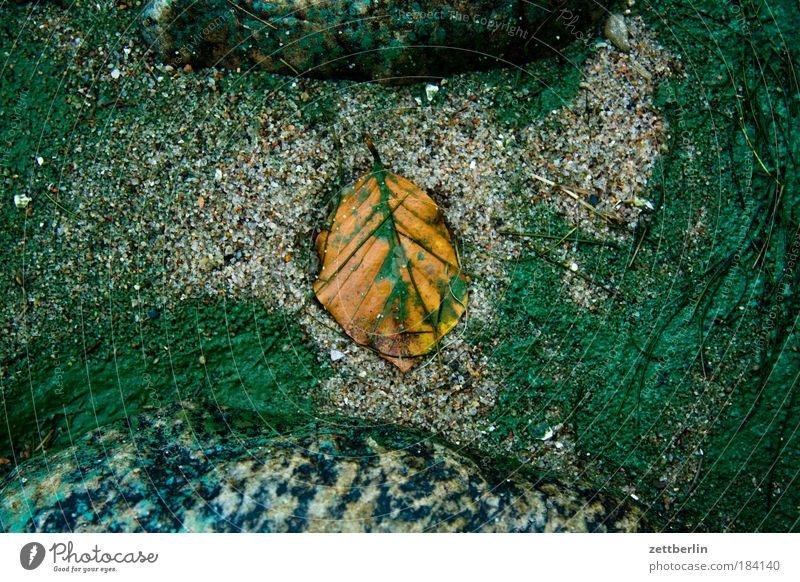 Blatt (am Strand) Herbst Herbstlaub Meer Sand Farbe Farbstoff Algen Pigmentfleck Farbmittel Stein Strukturen & Formen