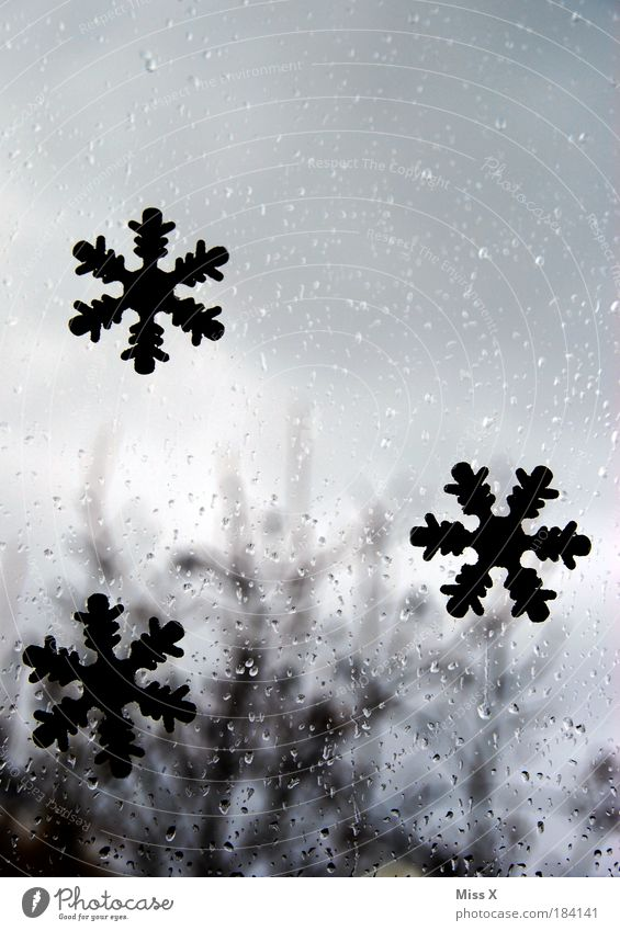 Weiße Weihnacht ??? Farbfoto Gedeckte Farben Innenaufnahme Nahaufnahme Menschenleer Textfreiraum links Textfreiraum rechts Textfreiraum oben Textfreiraum Mitte