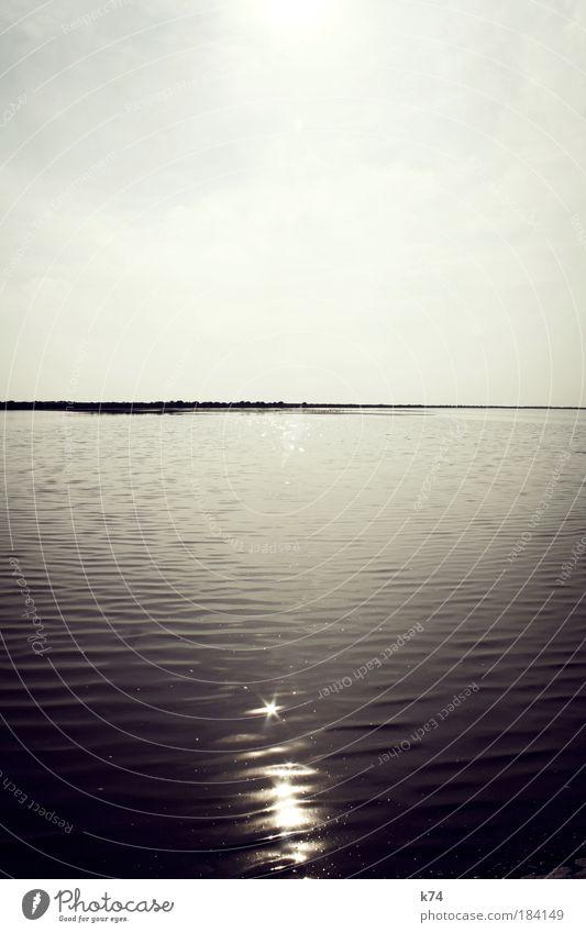 Delta de l'Ebre Flamingo Wasser Meer Licht Lichtpunkte Reflexion Horizont Sonne Gegenlicht