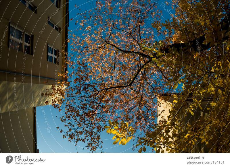 Endlosserie Himmel Baum Sonne Blatt Haus Herbst Mauer Gebäude hell Gold Jahreszeiten Hinterhof blenden Mieter Nachbar Herbstlaub