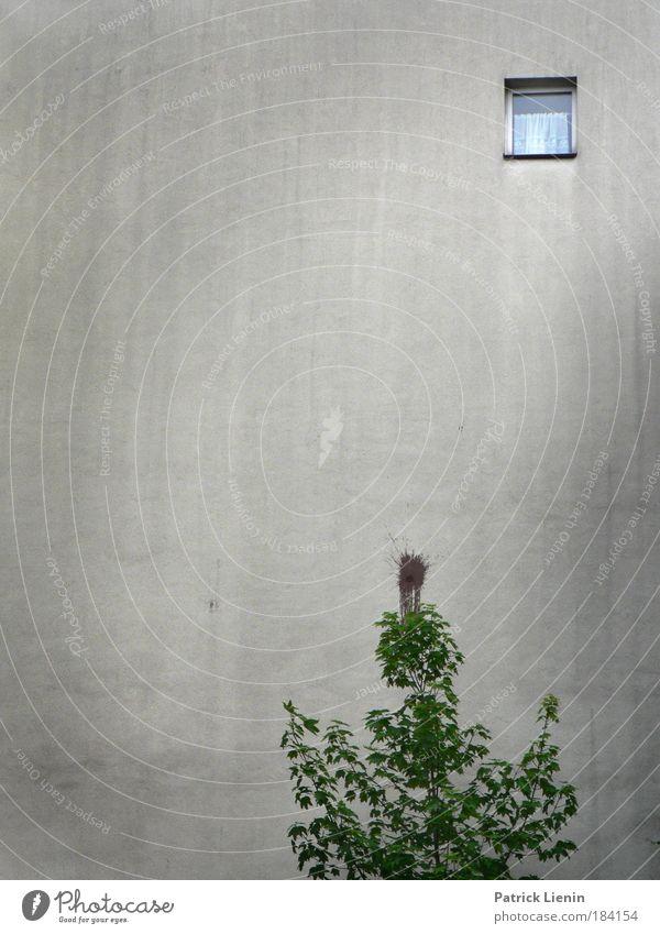 look out Umwelt Baum Stadt Haus Gebäude Mauer Wand Fenster dreckig hoch grau Traurigkeit Vorhang beklemmend trist Freiheit bodenlos Altona Farbfoto