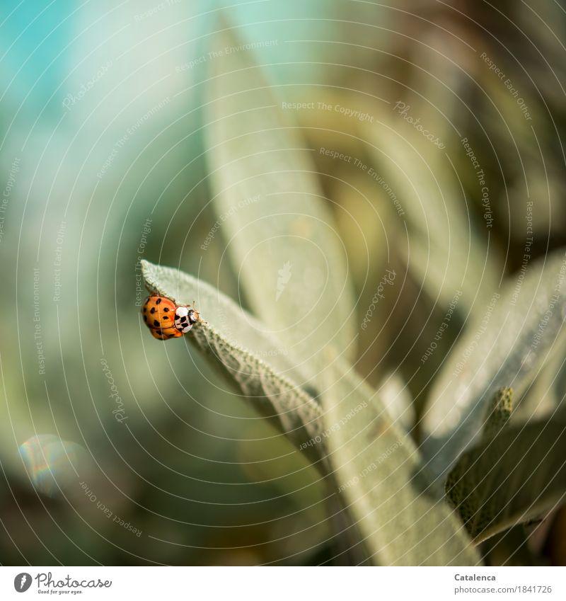 Wanderung Natur Pflanze grün Blatt Tier Herbst Bewegung Gesundheit Glück Garten Freiheit braun orange Design Wachstum ästhetisch
