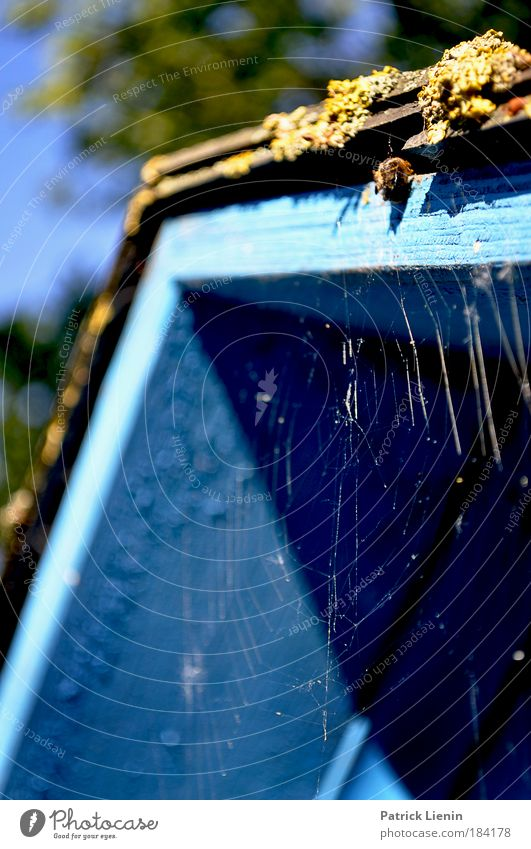 ein Platz zum ruhen Baum blau Tier Park Umwelt Ecke Schutz Hütte Moos Spinne Spinnennetz Stadtrand