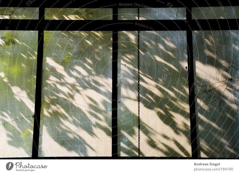 BlattWerk Natur alt Baum Pflanze Haus Fenster Umwelt Architektur springen Gebäude ästhetisch kaputt authentisch trist Industrie
