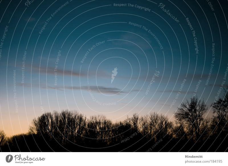 Scharfe Schiluette bei Schonnenuntergang Farbfoto Außenaufnahme Menschenleer Textfreiraum oben Dämmerung Licht Schatten Kontrast Silhouette Sonnenaufgang