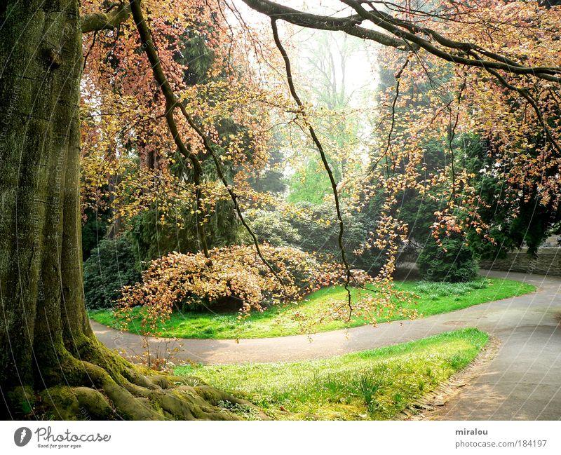 Märchenwald Natur Baum grün Pflanze ruhig Wald Leben Erholung Wiese Frühling träumen Wege & Pfade Park Landschaft Kraft Umwelt