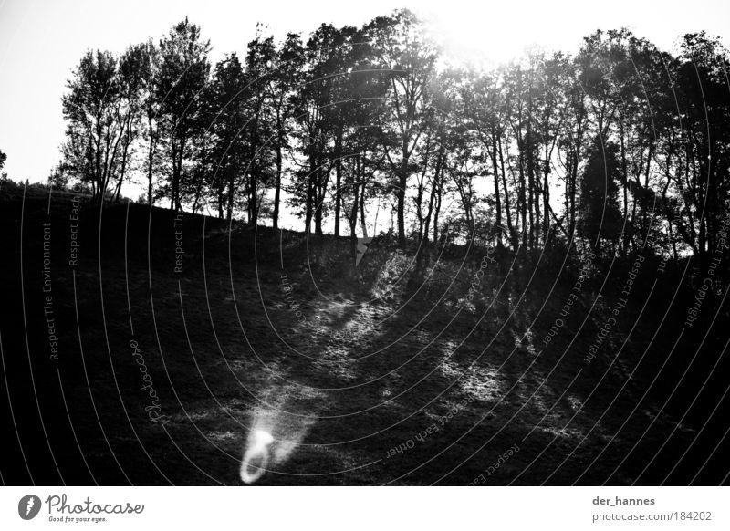 hahnenkamm Schwarzweißfoto Außenaufnahme Experiment Strukturen & Formen Menschenleer Morgen Tag Licht Schatten Kontrast Silhouette Lichterscheinung Sonnenlicht