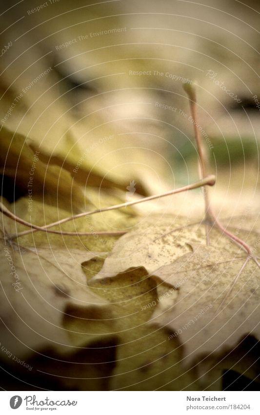 Herbstfang. Natur alt schön Baum Pflanze Blatt Umwelt Landschaft Tod Herbst Traurigkeit träumen Park Stimmung Zeit verrückt