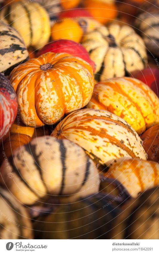 Kürbis Gemüse Ernährung Mittagessen Vegetarische Ernährung Pflanze Essen mehrfarbig gelb grün orange Halloween Kürbisgewächse Lebensmittel Speisekürbis Farbfoto