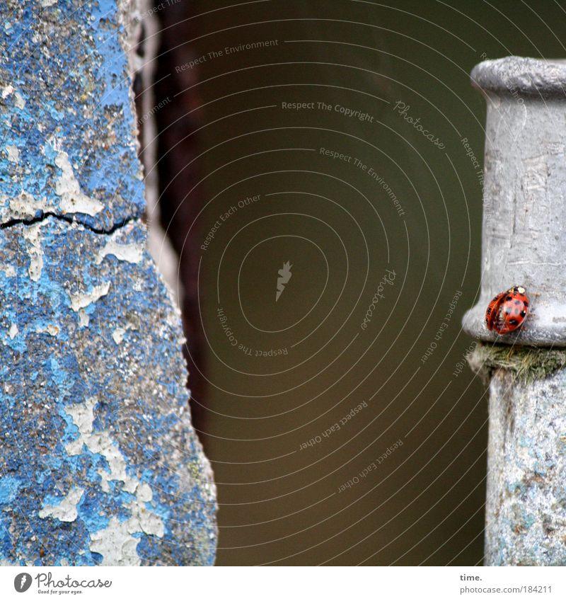 Spätheimkehrer rot schwarz Ferne Stein Suche Beton Mauer Klettern Insekt Punkt Riss Marienkäfer Käfer krabbeln Gelände Mauerreste