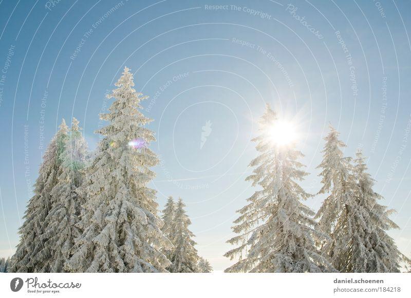 schnee weiß hellblau Natur Pflanze Sonne Winter Schnee Luft Klima Schönes Wetter rein Licht Tanne Baum Wolkenloser Himmel hell-blau