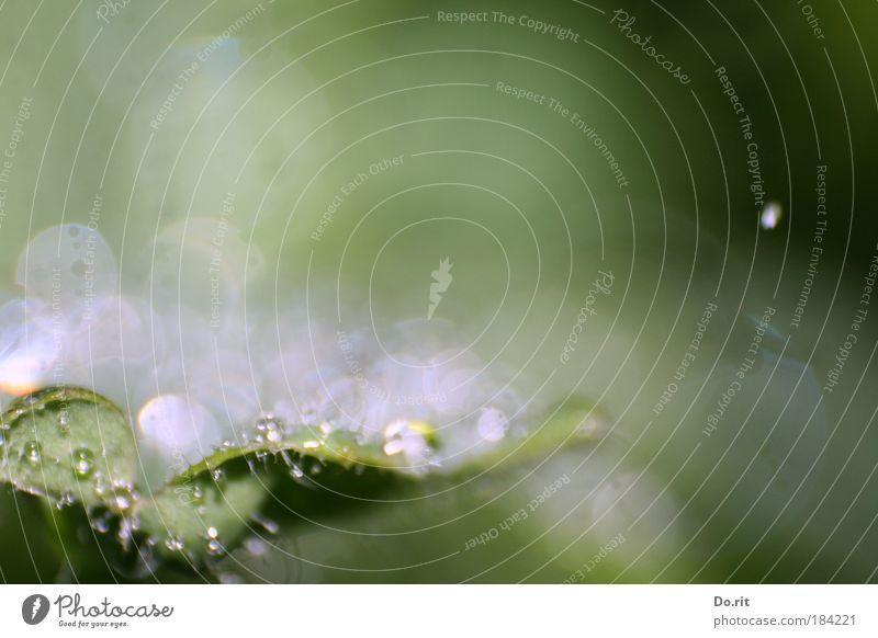 Schärfe ist überbewertet... Natur Wasser Pflanze Sonne Blume Blatt Herbst Regen nass natürlich Wassertropfen Wachstum leuchten Vergänglichkeit Tropfen einfach