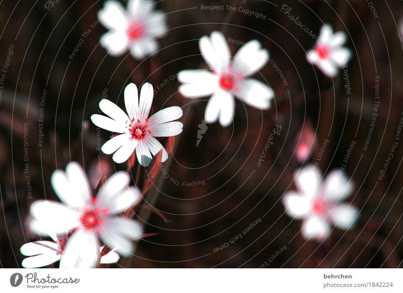 kleine fundstücke Natur Pflanze Sommer schön Blume Blatt Blüte Frühling Wiese Gras Garten Park Feld Wachstum Blühend