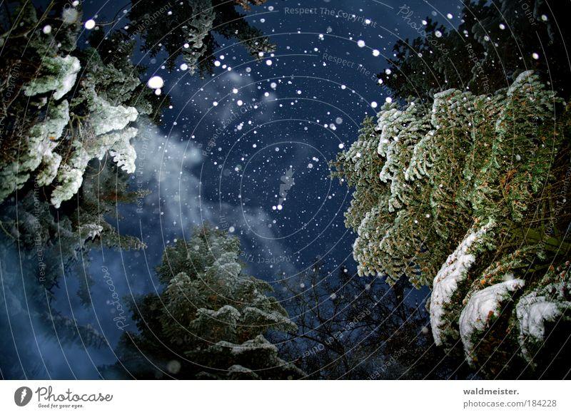 Geist der zukünftigen Weihnacht Nacht Baum Winter ruhig Wald kalt Schnee Gefühle Klima Schneefall Eis Nebel Frost Romantik Farbfoto Ast