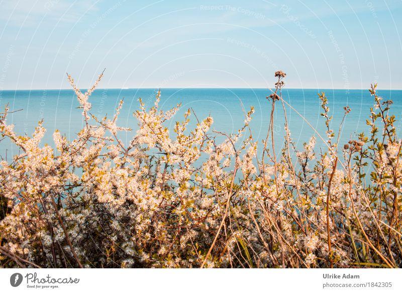 Weißdorn an der Ostsee Himmel Natur Pflanze Wasser Blume Meer Landschaft Strand Blüte Innenarchitektur Frühling Küste Design Horizont Wellen Dekoration & Verzierung