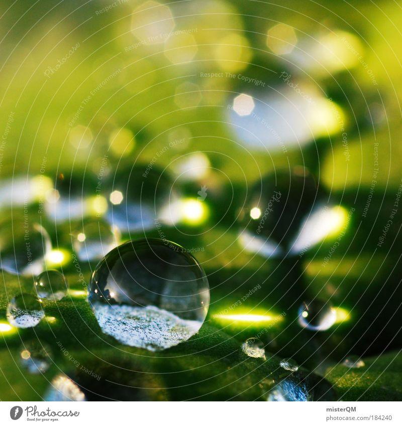 Little World. Makroaufnahme Natur Wasser schön grün Sonnenlicht ruhig Leben Erholung abstrakt Regen Licht Erde Muster Gesundheit klein