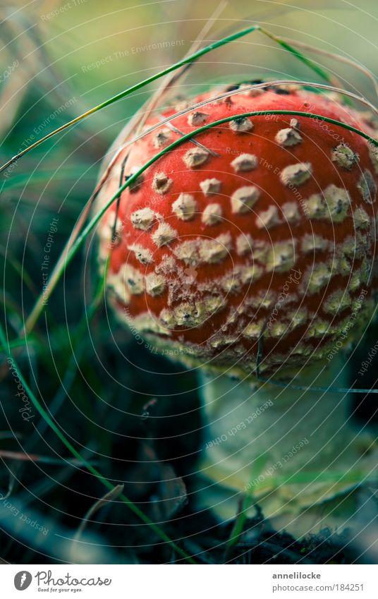 Kontrastprogramm Außenaufnahme Detailaufnahme Makroaufnahme Schwache Tiefenschärfe Lebensmittel Ernährung Ausflug Umwelt Natur Pflanze Gras Pilz Pilzhut Lamelle