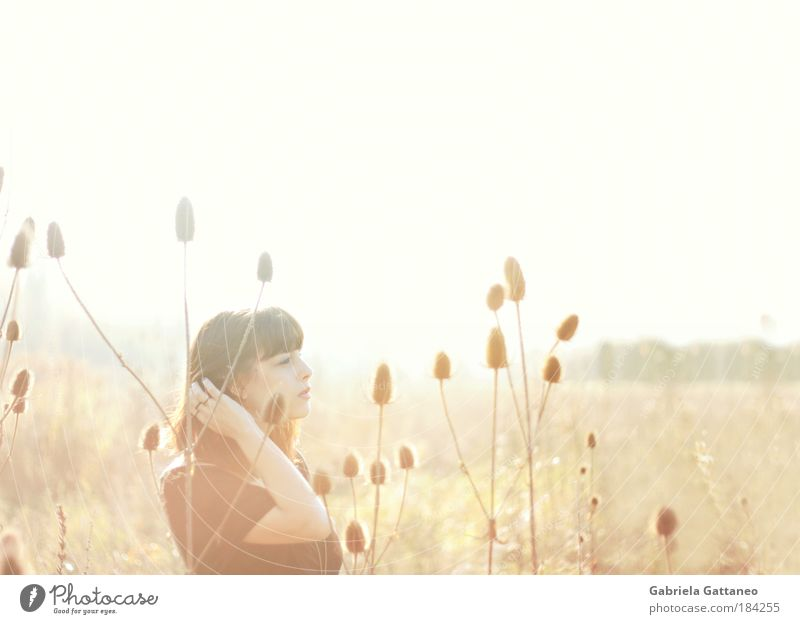 Wüstenflimmern Ferne feminin Landschaft träumen hell braun Horizont gold Unschärfe Mensch Zukunft Sträucher Pflanze Unendlichkeit leuchten heiß