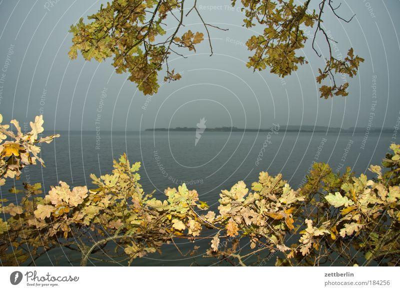 Neu Reddevitz Wasser Meer Ostsee Küste Ferien & Urlaub & Reisen Freizeit & Hobby Mecklenburg-Vorpommern Insel Ferne Freiheit Horizont Sehnsucht Perspektive