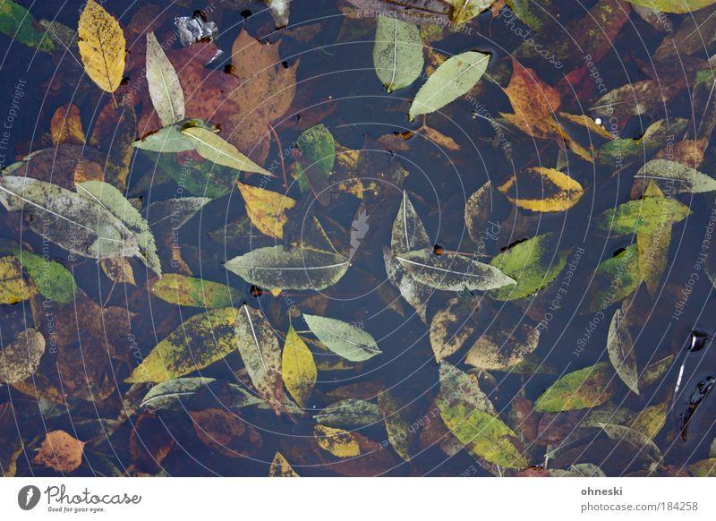 Trüber Herbst Natur Wasser Baum grün Pflanze Blatt gelb Tod Traurigkeit braun Wetter Umwelt Trauer trist Ende Müdigkeit
