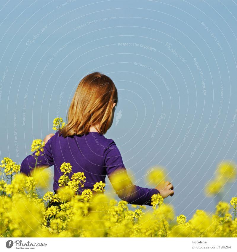 Sommerfreuden Farbfoto mehrfarbig Außenaufnahme Textfreiraum rechts Textfreiraum oben Tag Licht Sonnenlicht Oberkörper Rückansicht Mensch Kind Mädchen Kopf