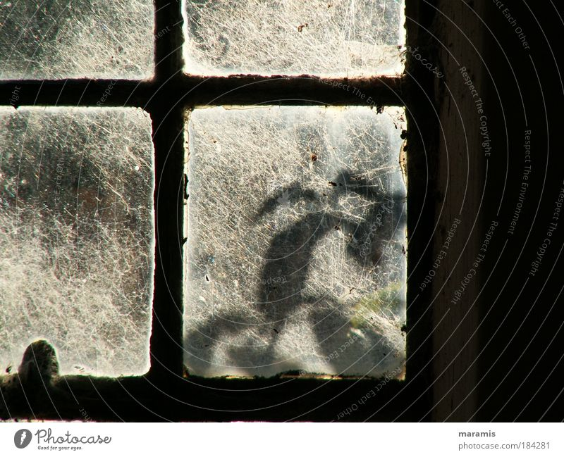Und morgen wird geputzt... weiß Sonne grün Pflanze Sommer ruhig Blatt schwarz Ferne Fenster Zufriedenheit Metall Glas Dorf Gelassenheit Rost