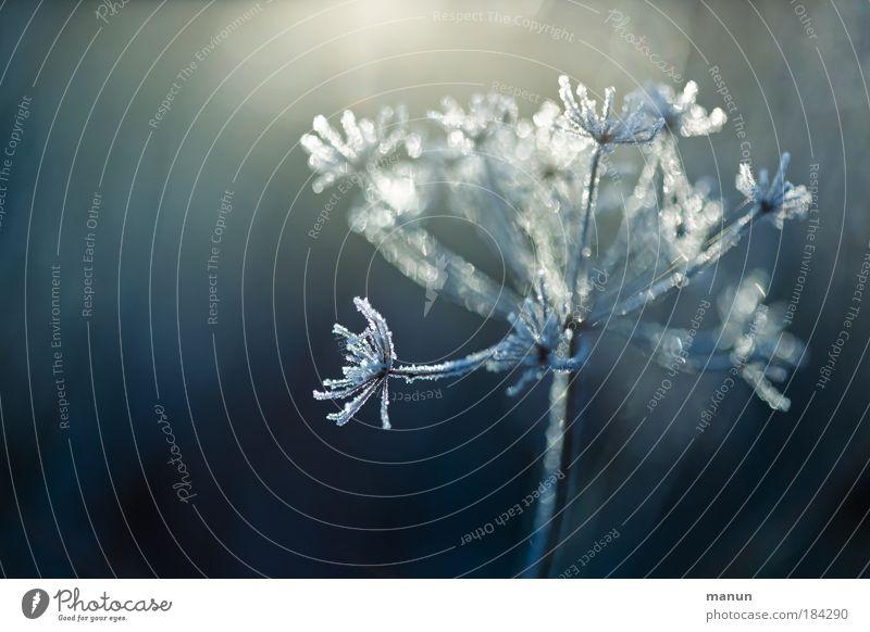 Raureif Natur blau Pflanze weiß Erholung ruhig Winter kalt Schnee glänzend Park Eis Design leuchten Sträucher Wassertropfen