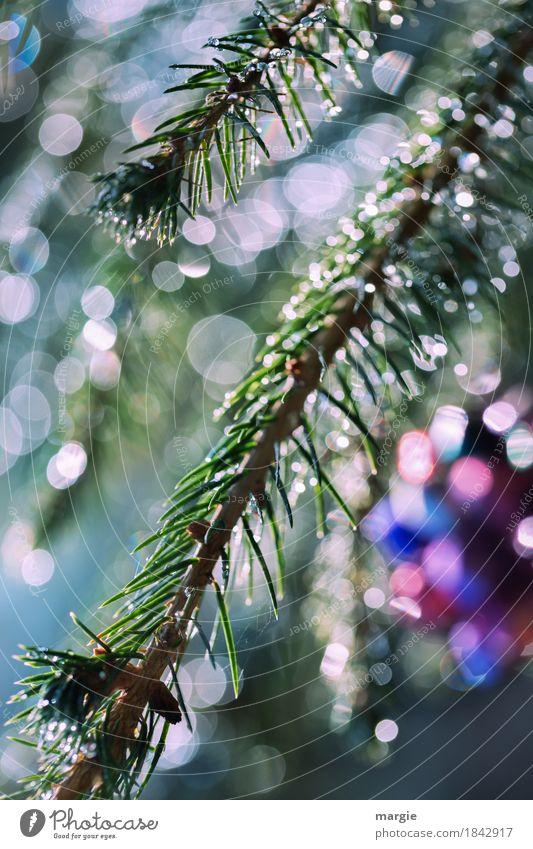 Weihnachtliches Glitzern II Feste & Feiern Weihnachten & Advent Eis Frost Pflanze Baum Grünpflanze blau mehrfarbig grün Weihnachtsbaum Weihnachtsdekoration