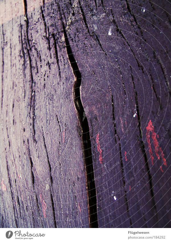 Old like a tree Natur alt schön Baum Farbe Umwelt Wiese Holz Kunst Park Zufriedenheit Freizeit & Hobby groß Lifestyle Bank Teilung
