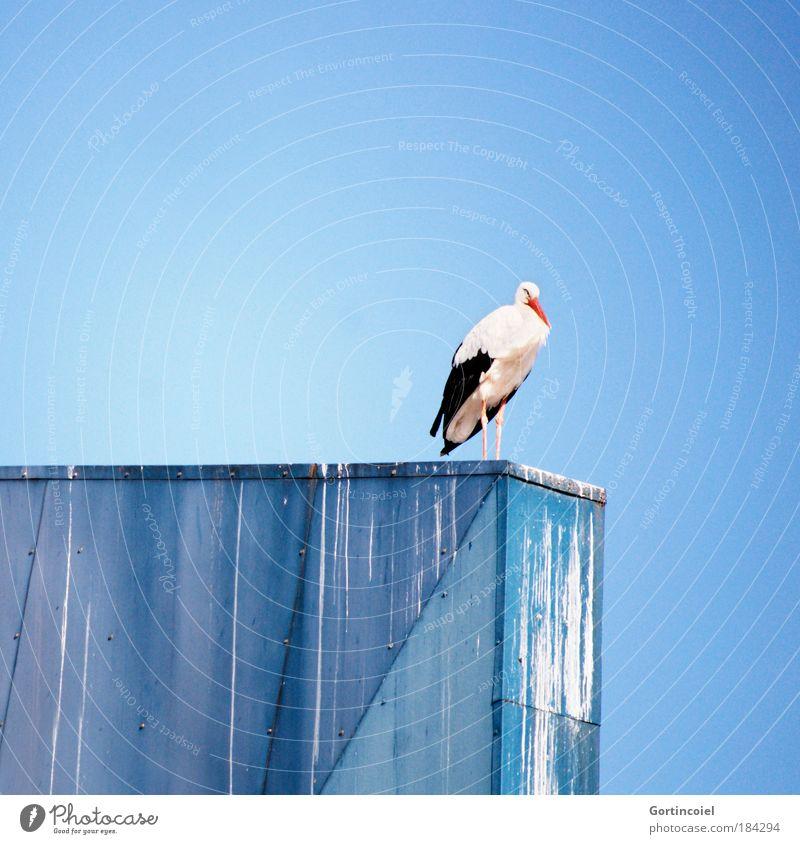 Storch auf Blau Himmel blau Sommer Tier Farbe Freiheit Luft Vogel Metall sitzen Flügel Wildtier Schönes Wetter Geburt Blauer Himmel Nachkommen