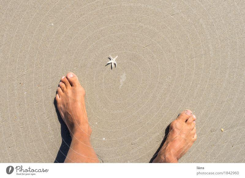 Seestern Ferien & Urlaub & Reisen Strand Fuß Sand maritim