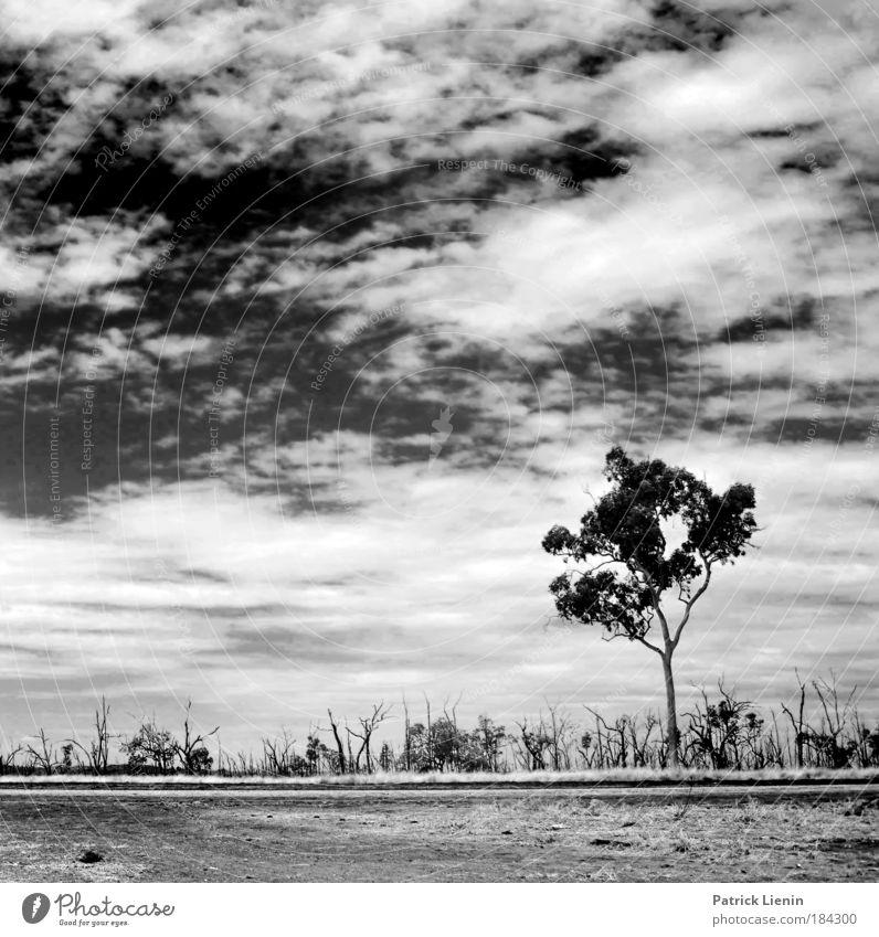 burned trees Umwelt Landschaft Luft Himmel Wolken Klima Wetter Dürre Baum Ferien & Urlaub & Reisen Australien Straße Einsamkeit unterwegs Freiheit beklemmend