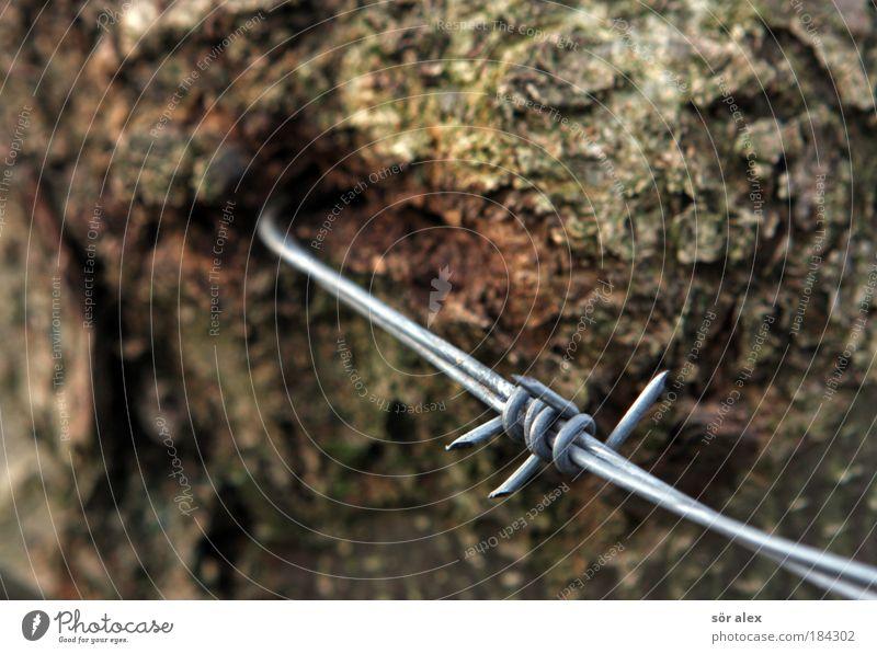 Zeit verbindet Natur Baum Baumstamm Baumrinde Stacheldraht Draht Metall alt fest Spitze braun silber Zusammensein Ausdauer Sicherheit Grenze Stacheldrahtzaun