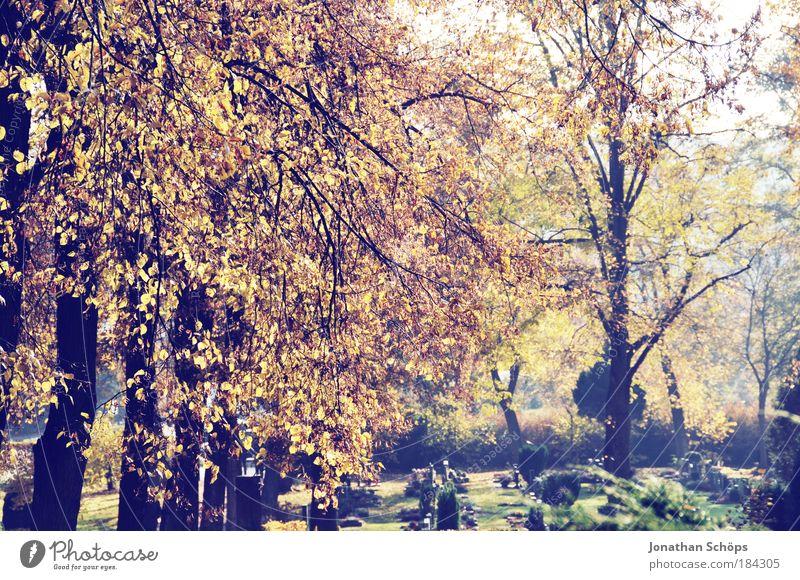 Friedhofserwachen Natur Baum grün ruhig Blatt gelb Farbe Herbst Tod Traurigkeit braun Religion & Glaube Umwelt gold Trauer Vergänglichkeit