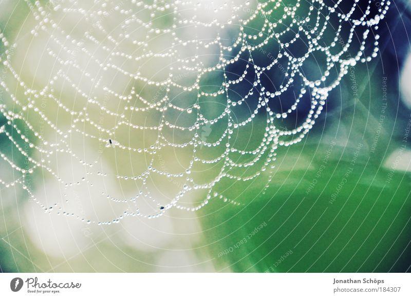 perfektes Geflecht Natur blau grün weiß Tier Umwelt glänzend Wassertropfen Netzwerk dünn Netz Tau Falle klug Spinne Spinnennetz