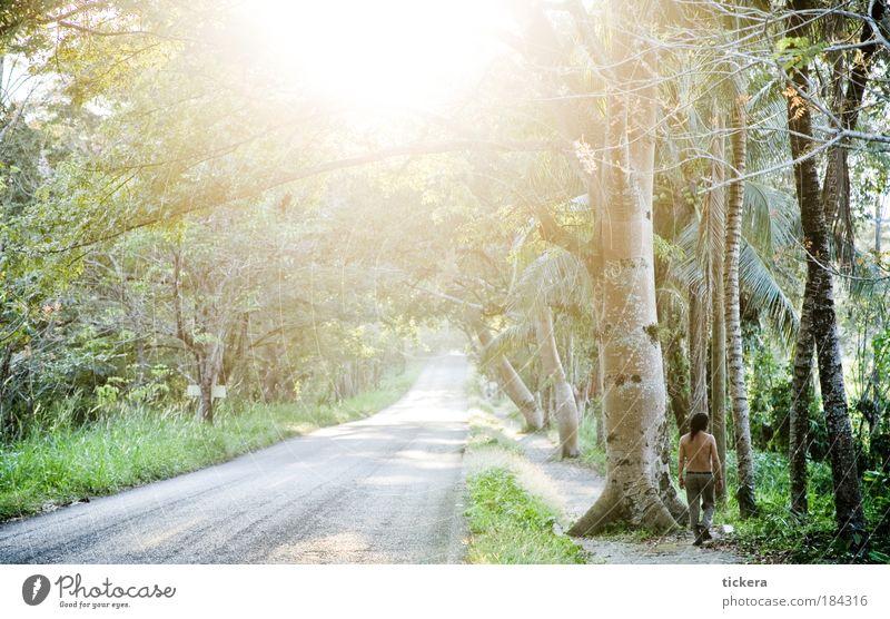 lush road Natur grün Baum Pflanze Ferien & Urlaub & Reisen Ferne Wald Straße Landschaft Wärme gehen Tourismus Umwelt Amerika Urwald Schönes Wetter