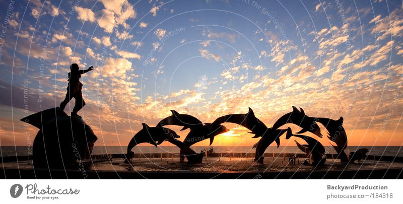 Sonnenuntergang Natur Wal schön Himmel Sonne Meer blau Ferien & Urlaub & Reisen Wolken gelb Farbe Hotel Sonnenaufgang Tier Silhouette