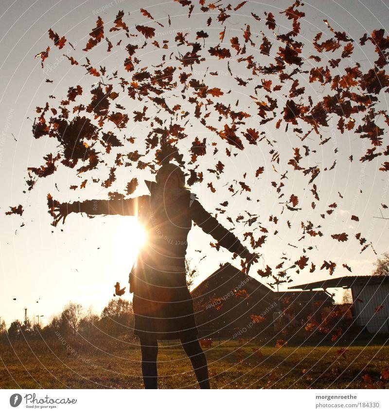 ich liebe den herbst! Frau Mensch Natur Jugendliche rot Freude Blatt Erwachsene gelb Herbst feminin Umwelt Landschaft Sonnenstrahlen Glück Beine