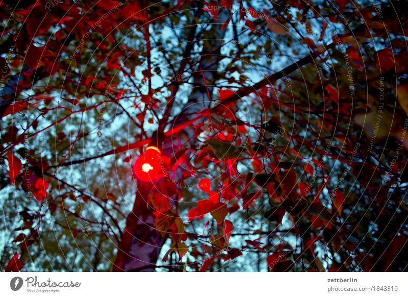 Herbstparty Baum rot dunkel Garten Party Park Textfreiraum Ausflug Ast geheimnisvoll Gastronomie Zweig Glühbirne Allee Signal Lichterkette